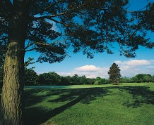 Camperdown Golf Course